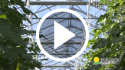 Invernaderos de alta tecnología – Prácticas culturales