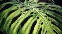 ¿Cómo detectar si una planta está bien nutrida?