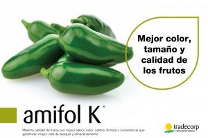 amifolK-01