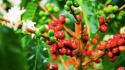 Colombia: sus principales cultivos