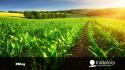 La agricultura en el verano