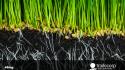 Importancia del sistema radicular en tus cultivos