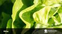 Clorosis férrica: Enemigo latente de tu cultivo