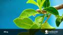 La transpiración: Fuerza motriz más importante en tu cultivo