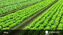 Los bioestimulantes y la nutrición vegetal